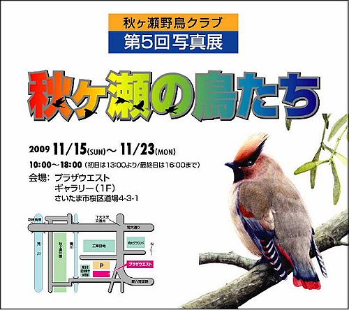秋ヶ瀬の鳥たち
