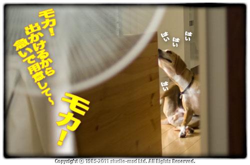 110627_01.jpg