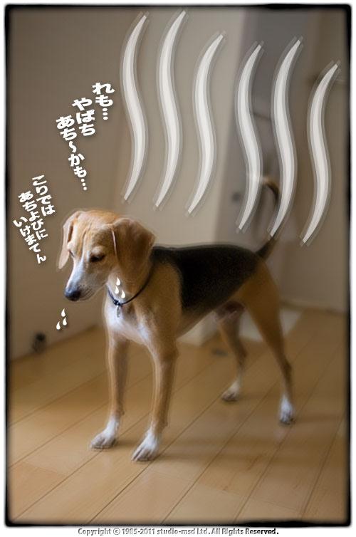 110716_02.jpg