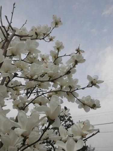 木蓮空2011
