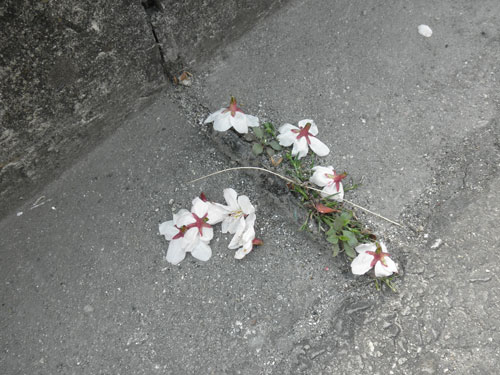 桜散った2011