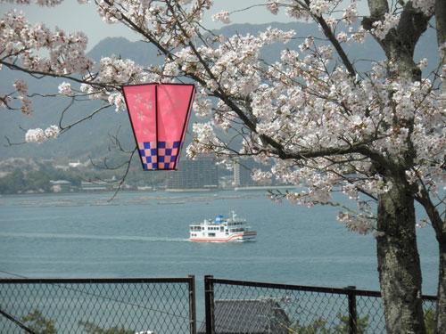 フェリーと桜