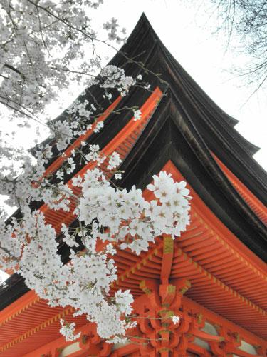 塔と桜近景