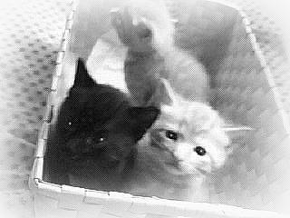 イメージ「捨て猫」シンジ・アスカ・レイちゃんの協力!