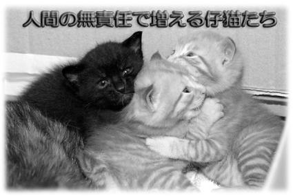 人間の無責任で増える仔猫