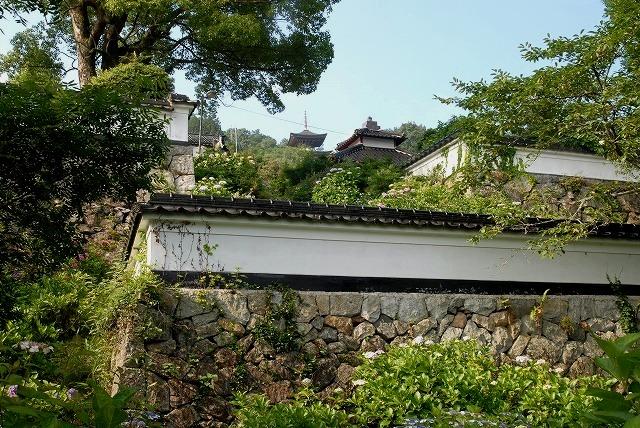 長法寺の紫陽花3