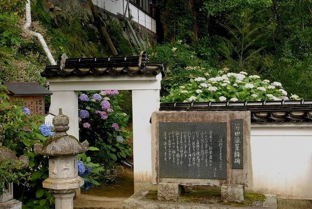 長法寺の紫陽花6