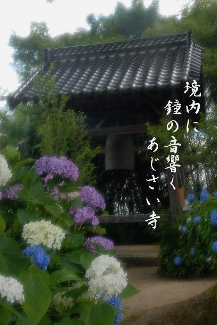 長法寺の紫陽花11-2