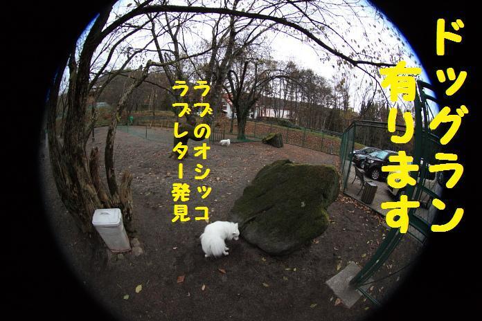 IMG_03112010.jpg