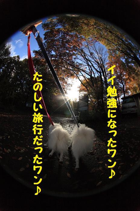 IMG_08742010.jpg