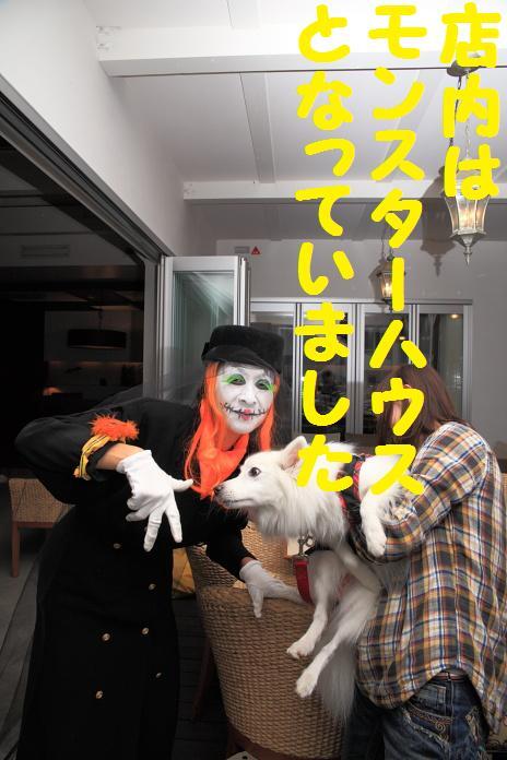 IMG_09462010.jpg