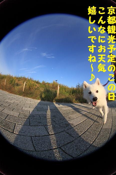 IMG_10962010.jpg
