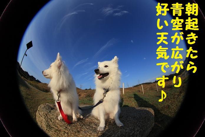IMG_11132010.jpg