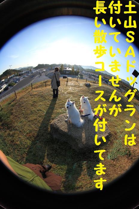 IMG_11162010.jpg