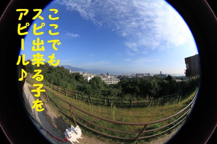 IMG_11292010.jpg