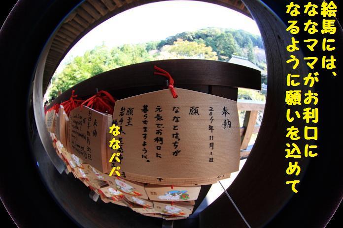 IMG_12932010.jpg