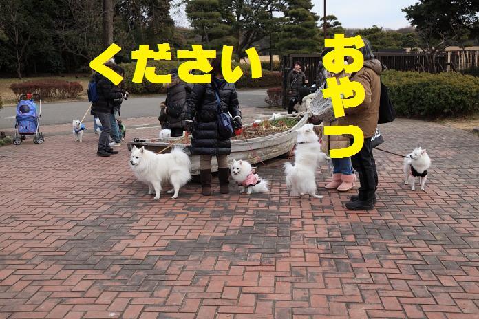IMG_25312010.jpg