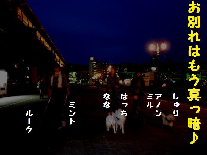IMG_25922010.jpg