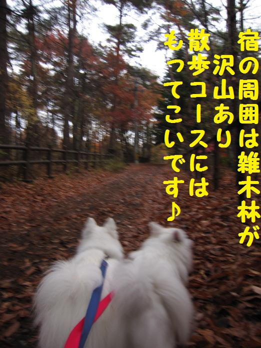 IMG_26912010.jpg