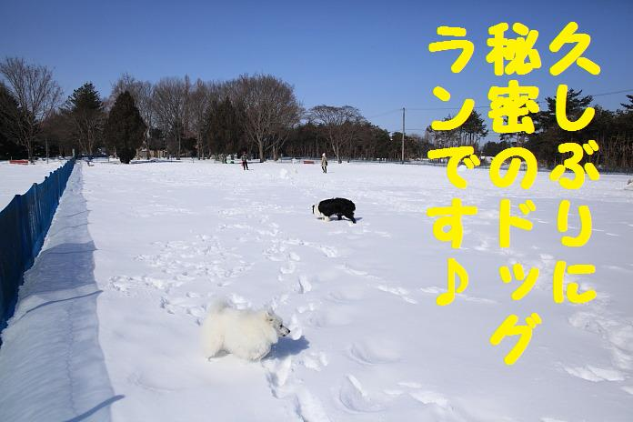 IMG_29502010.jpg