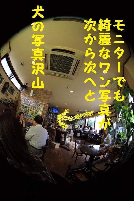 IMG_78332010.jpg