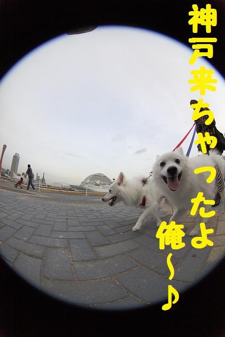 IMG_79782010.jpg