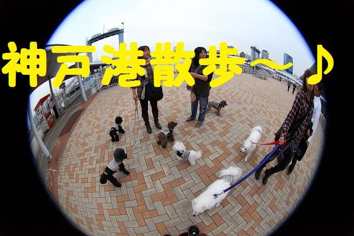 IMG_79992010.jpg