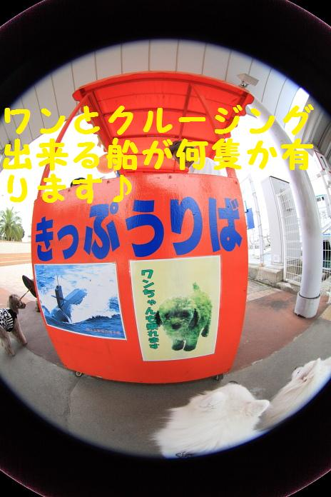 IMG_80012010.jpg
