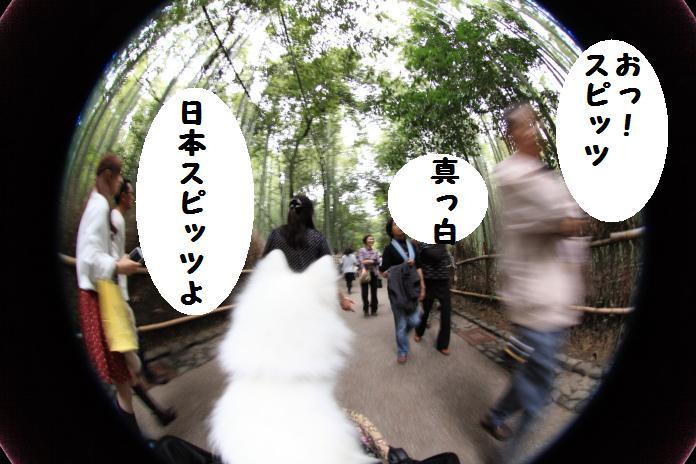 IMG_83732010.jpg