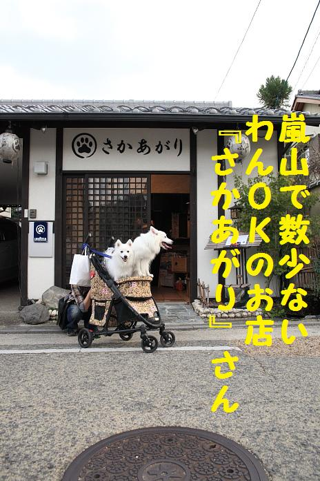 IMG_86052010.jpg