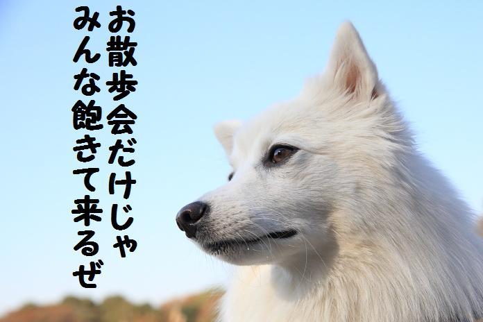 IMG_94792010.jpg