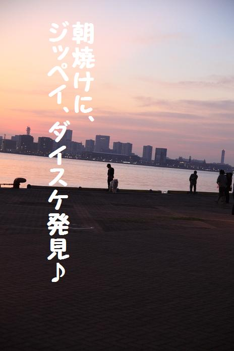 IMG_9851_12010.jpg