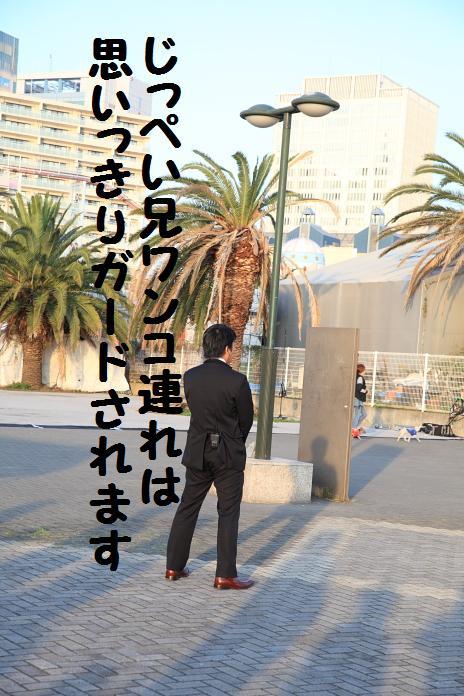 IMG_99022010.jpg