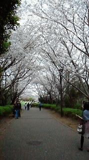 s-山頂公園20110410