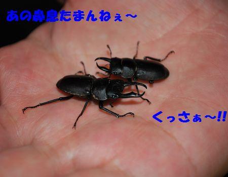 DSC_0029_20090821221240.jpg