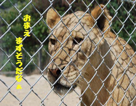 DSC_0110_20090925210746.jpg