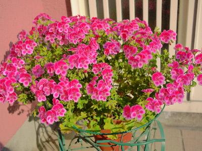 エヴァのお花