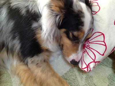 kaito 2歳10カ月