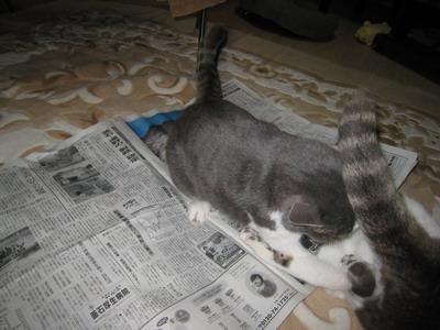 IMG_9823猫