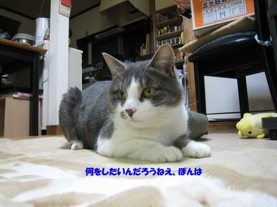 IMG_9833ぷう