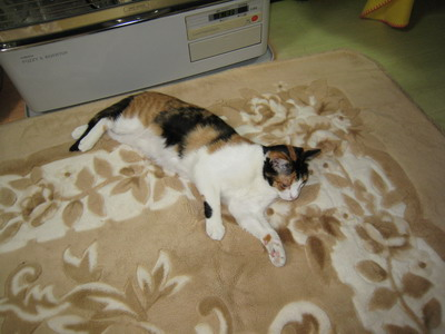 IMG_9884寝る猫