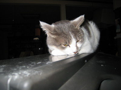 IMG_9885寝る猫