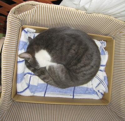 IMG_9886寝る猫