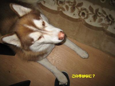 IMG_9950小僧