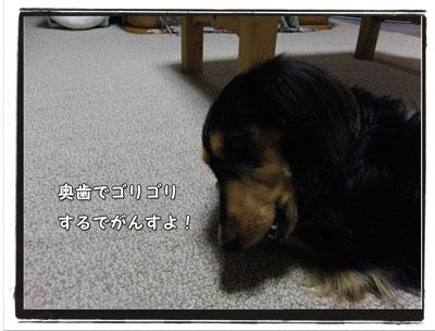 2009102704.jpg