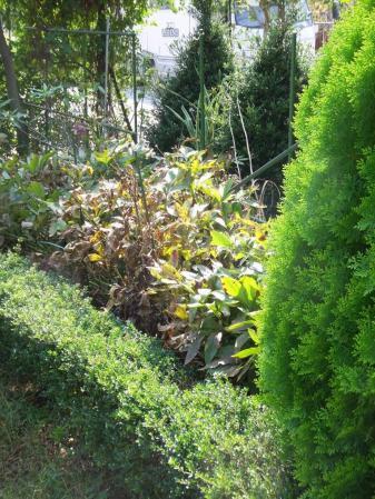 2011-10-10_09.jpg