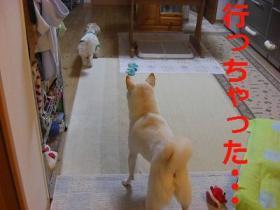 003_20091007192505.jpg