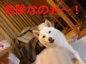 008_20090913200759.jpg