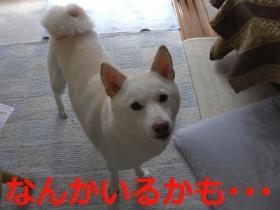 009_20090926092339.jpg