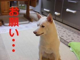 011_20090905132951.jpg